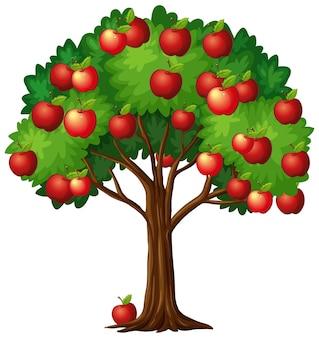 흰색 배경에 고립 된 나무에 많은 빨간 사과