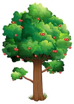 白い背景で隔離の木の上の多くの赤いリンゴ