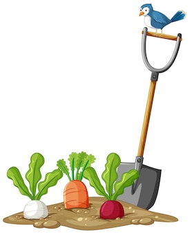 Many root vegetables in soil with shovel in cartoon style isolated