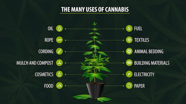 Many uses of hemp, poster with infographic of uses of cannabis and greenbush of cannabis plant on green background with cannabis leafs
