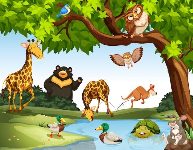 公園内の多くの野生動物