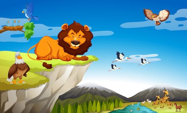 Многие дикие животные на скале