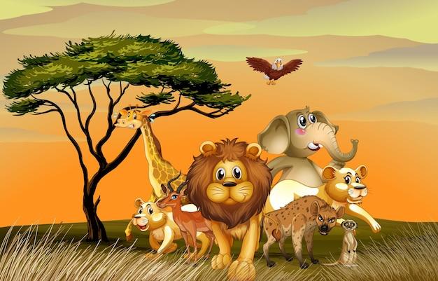 Many wild animals in savanna field