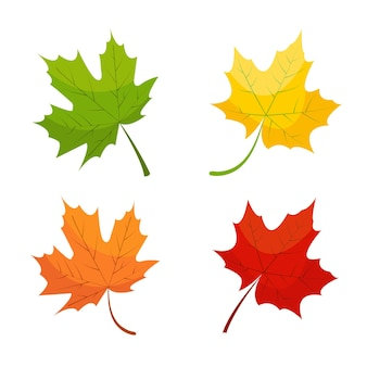 Maple leaf icons in red yellow and green colors isolated on white background autumn nature set