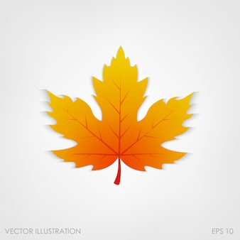 Maple leaf in a realistic style on white