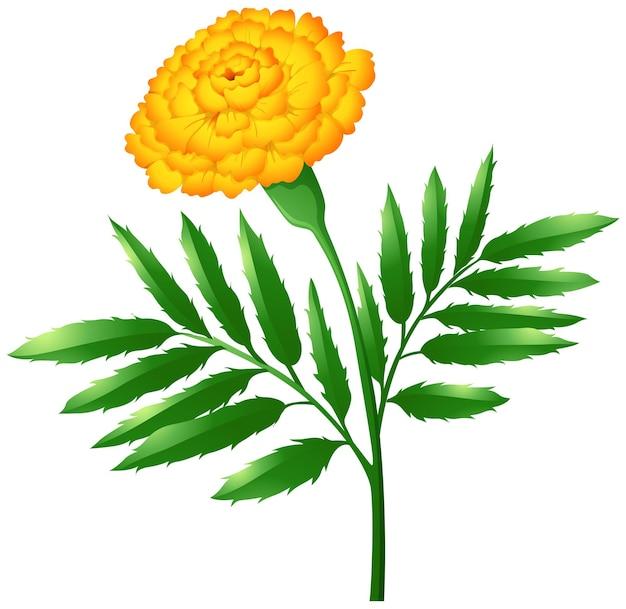 緑の葉とマリーゴールドの花