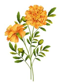 Marigold flowers isolated on white