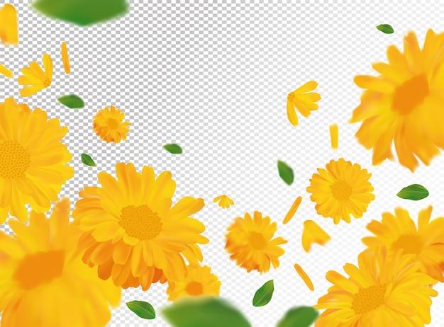 녹색 잎과 메리 골드. 모션에서 노란색 금 송 화 꽃입니다. 아름다운 메리 골드 공간. 금송화를 닫습니다. 떨어지는 꽃 금송화.