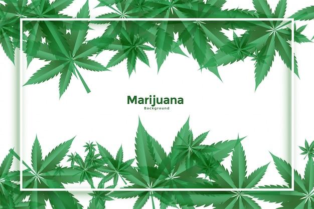 마리화나와 대마초 녹색 잎 배경 디자인