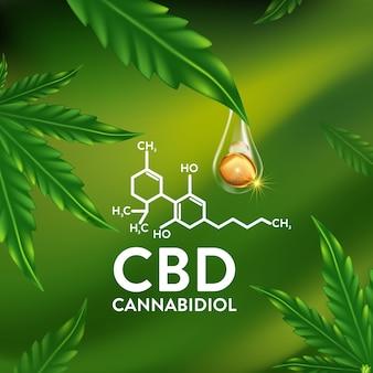 Marijuana  cannabis leaf vector illustration natural essence oil