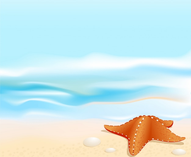 Marine landscape with a sea star, beach, sea and rocks