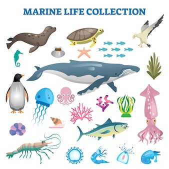 Marine life collection  illustration. sea and ocean wild fauna fishes