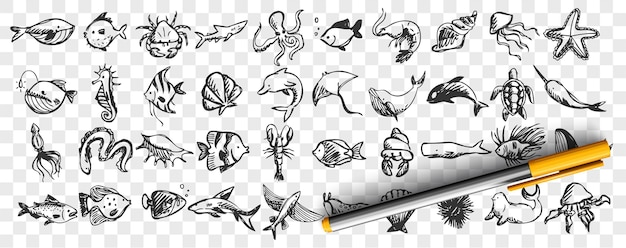 海洋生物の落書きセット。手描きのテンプレートのコレクションは、さまざまな海と海の魚のサメ、カメ、タコのカキのパターンをスケッチします。野生動物環境自然イラストの動物。
