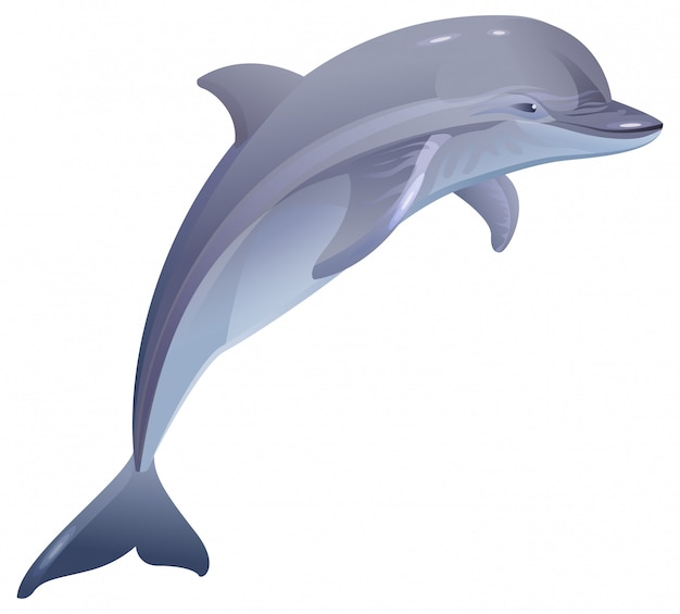 Морское млекопитающее дельфин