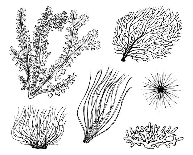 海の植物海藻。野菜の生活と魚の餌。古いスケッチ、ビンテージスタイルで刻まれた刻まれた手。航海や海の緑、モンスターや魚。海の動物。