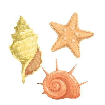 Marine seashells icon