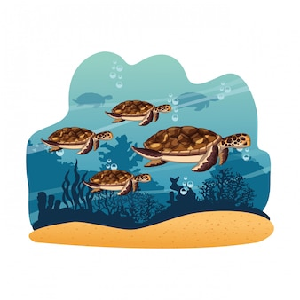 Marine turtles swimming in the sea