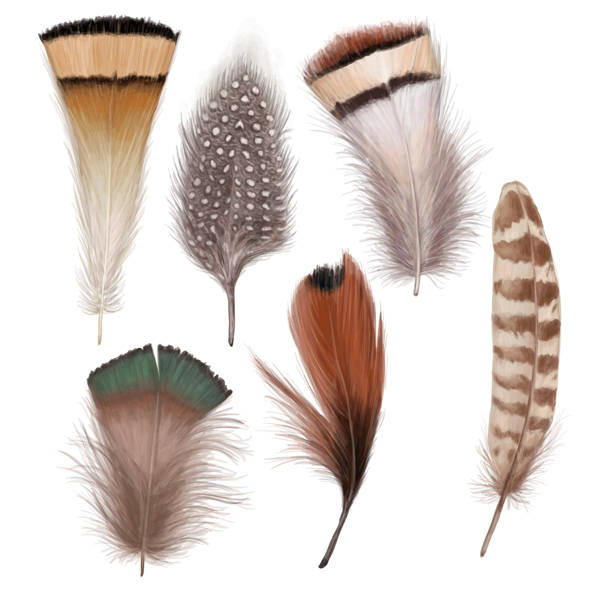 Marvelous feather set