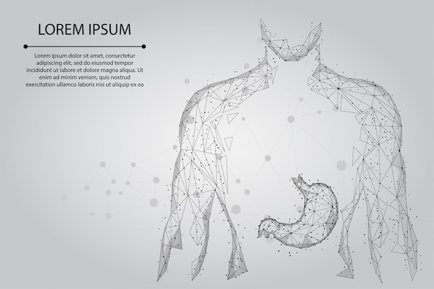 Mash line and point man silhouette healthy stomach connected dots low poly wireframe. low poly