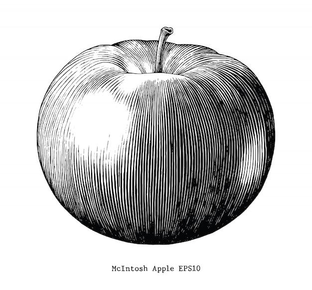 マッキントッシュアップル手描く白い背景で隔離ヴィンテージ
