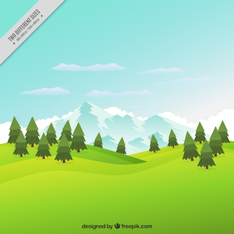 Meadow background with pines