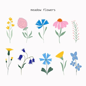 Meadow flowers and plants summer collection vector design isloated on white background