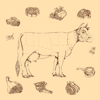 Meat hand drawn scheme of butchering beef with cow and herbs letterings on beige
