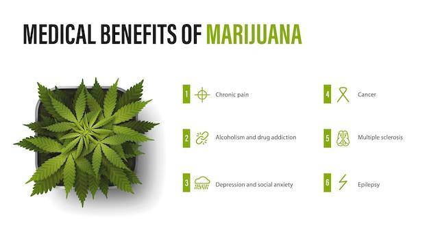 마리화나의 의료 혜택, 인포그래픽이 있는 흰색 포스터, 냄비에 대마초 덤불. 의료용 마리화나의 이점
