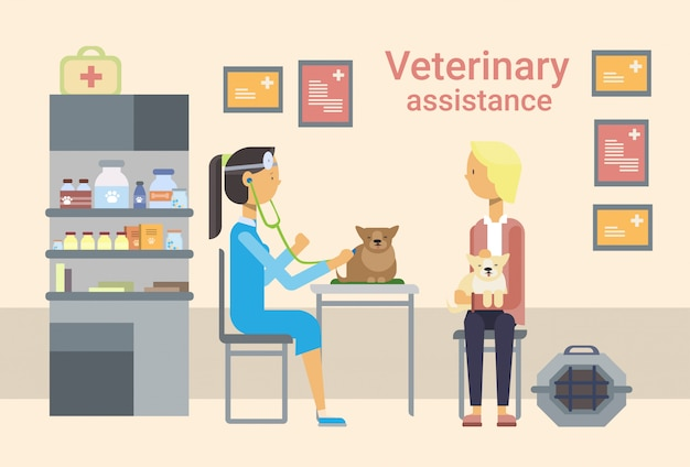 Medical doctor veterinarian cure animal in clinic of veterinary assistance