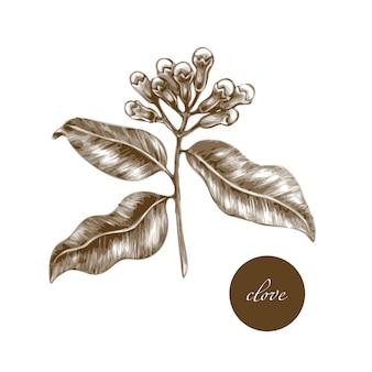 Medical herbs - clove.