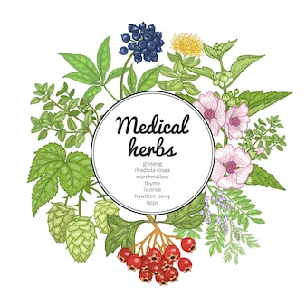 薬草、植物、碑文の場所。ヴィンテージの彫刻。手が白い背景上に描画します。カラフルなカード。テキスト、カバー、代替医療のポスターのイラスト。