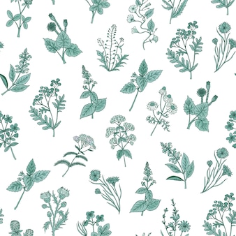 Medical herbs seamless pattern