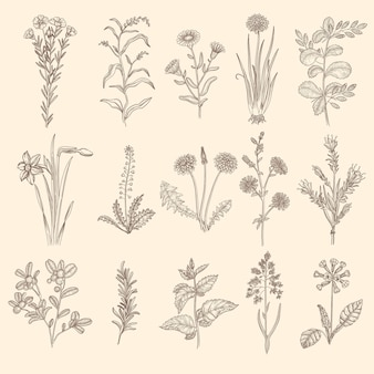 의료 허브 스케치. 잎 꽃 컬렉션 식물 꽃 치료 자연 식물.