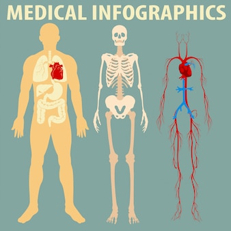Medical infographic of human body