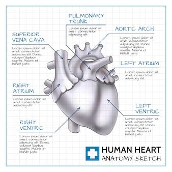 Concetto medico dell'organo interno con anatomia del cuore umano sul foglio di carta nell'illustrazione di stile di schizzo