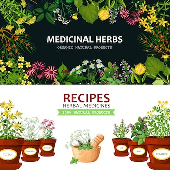Medicinal herbs background