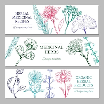 Medicinal herbs horizontal banners with different organic healthy spices