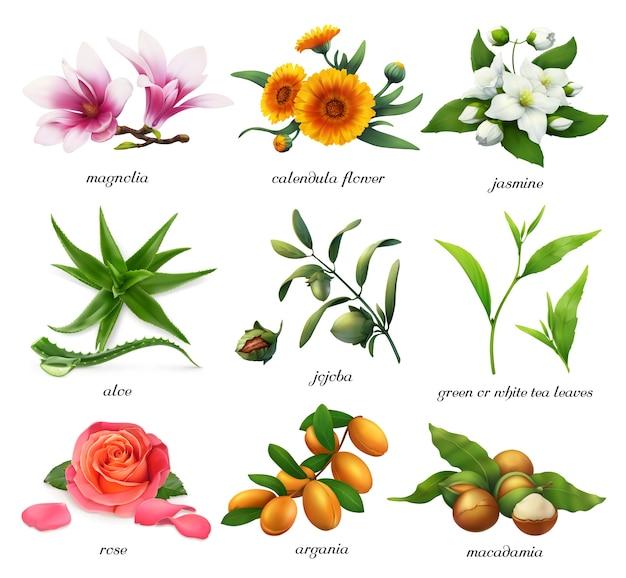 薬用植物とフレーバーのイラストセット