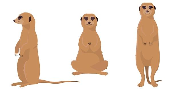 다른 포즈의 meerkat. 만화 스타일에 귀여운 동물의 집합입니다.