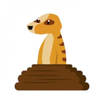 ミールカット野生動物