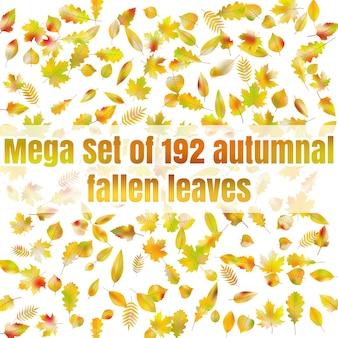 Mega set of 192 autumnal fallen leaves.