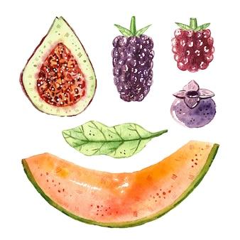 Дыня, инжир, ежевика, черника, малина, лист. тропические фрукты картинки, набор. акварельная иллюстрация. сырая свежая здоровая пища. веганский, вегетарианский. лето.