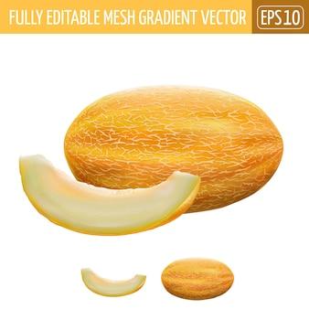 Melon illustration on white