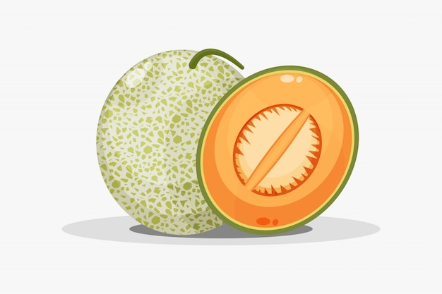 Melon and melon slices