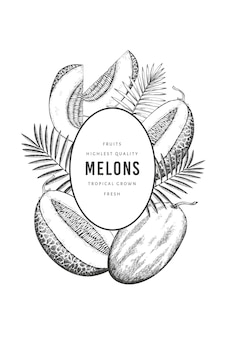 Melons with tropical leaves  template. hand drawn  exotic fruit illustration. retro style fruit .