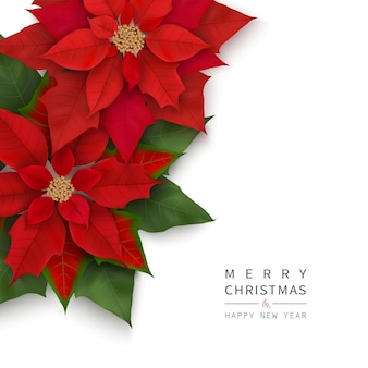 Merry christmas and happy new year banner with christmas red flowers isolated on white backdrop.