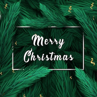 Merry christmas lettering. christmas card with pine or fir branches background.