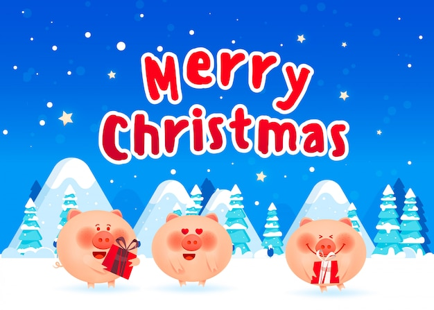 Merry fat pigs with a gift boxes