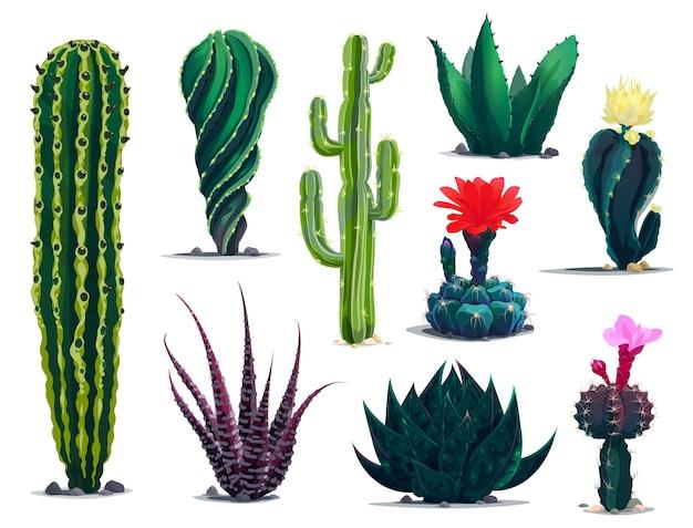 Мексиканские кактусы, мультяшные колючие суккуленты