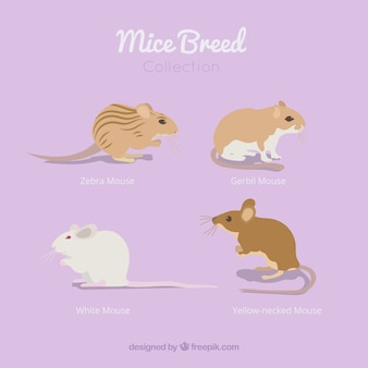 Mice breed pack of four